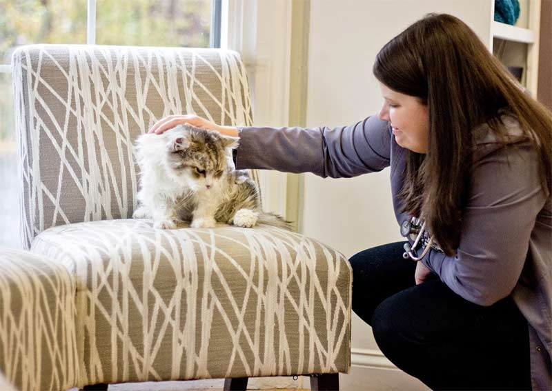 Cat Veterinary Care, Weymouth MA